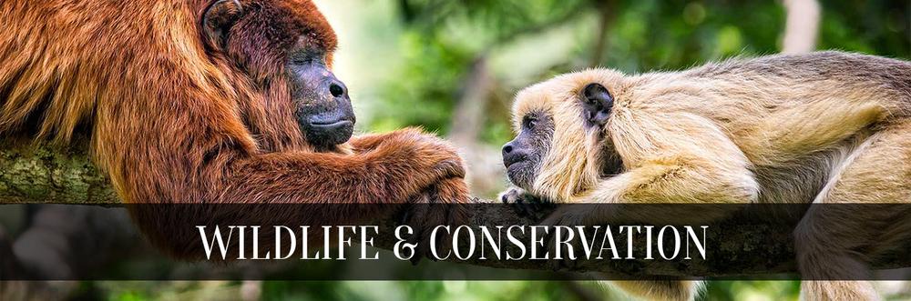 1-WildlifeConservation-title.jpg