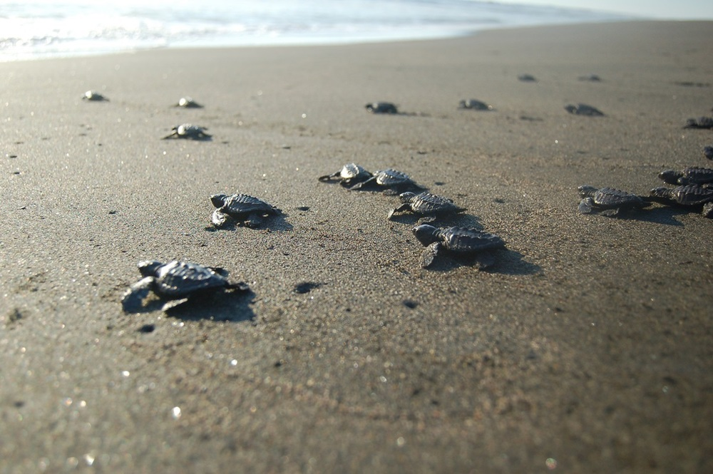 Sea Turtle Conservation - projectsabroad.org