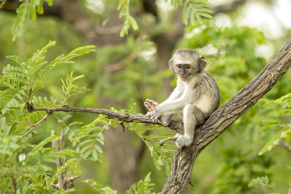 Vervet Monkey Foundation - Photo by Sheryl Minnett, Photographers Without Borders