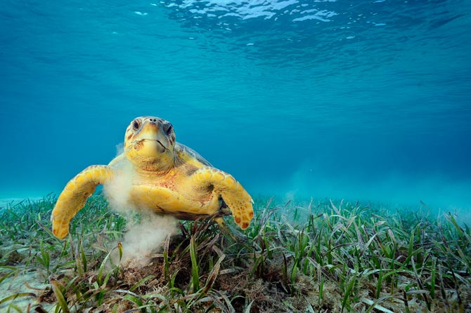 © Brian Skerry