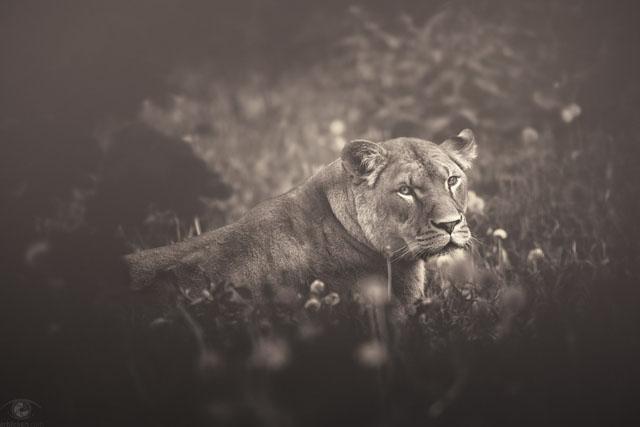 © Manuela Kulpa - African Souls