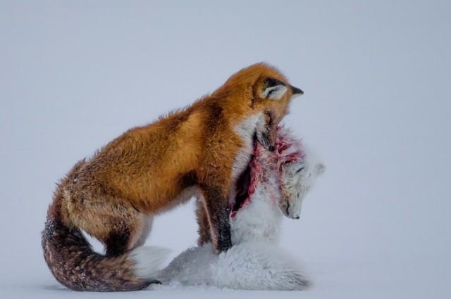 Photograph: Don Gutoski/2015 Wildlife Photographer of the Year