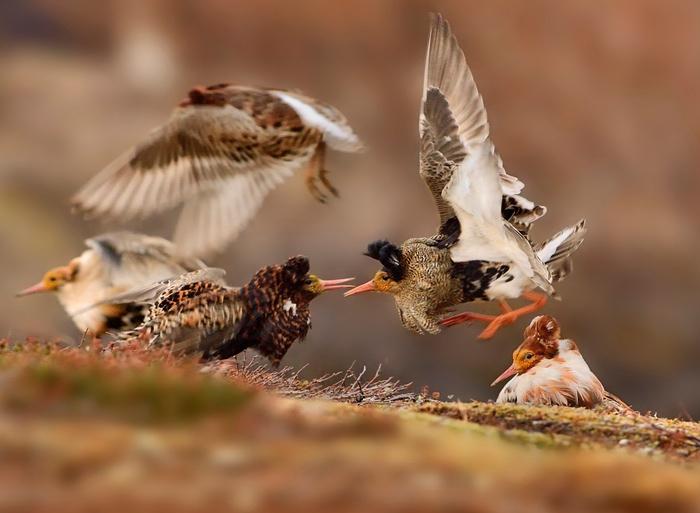 Photograph: Martin Pelanek/2015 Wildlife Photographer of the Year