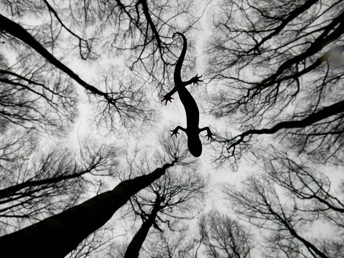 Photograph: Edwin Giesbers/2015 Wildlife Photographer of the Year