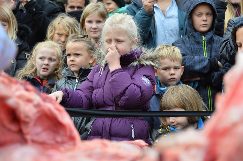 Courtesy of Seattle Times. Children look on as a young lion is publicly dissected at Odense Zoo in Denmark, in October 2015.
