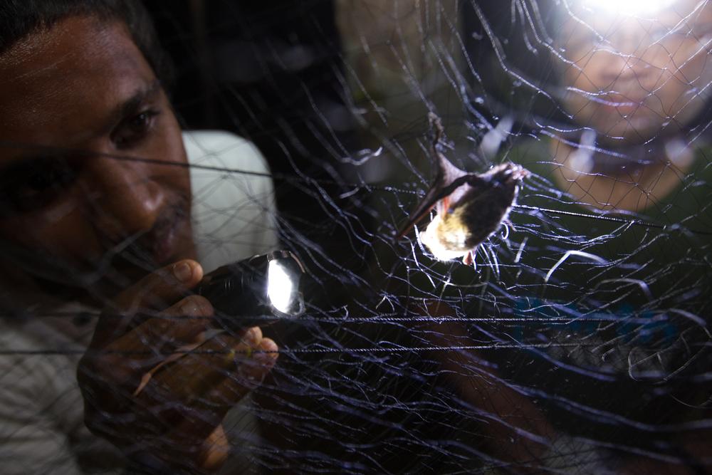 A member of the community examines a captured bat in Sri Lanka.PHOTOGRAPH BY DEIRDRE LEOWINATA.