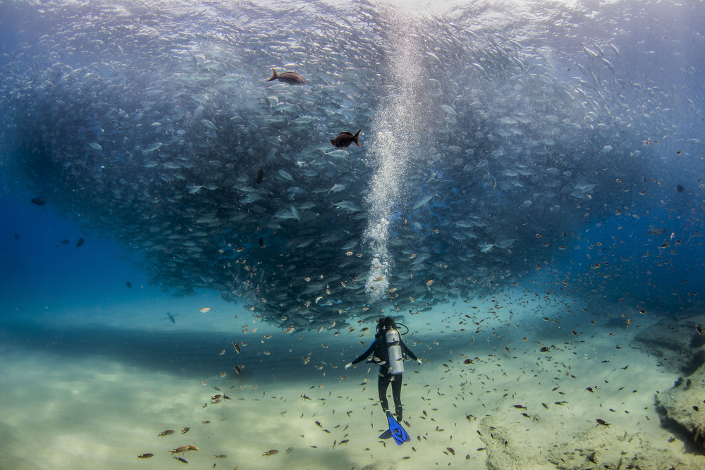 A School of Fish swarms around Tori Hester in the Sea of Cortez,Mexico. (Photo Credit Jeff Hester,2014)