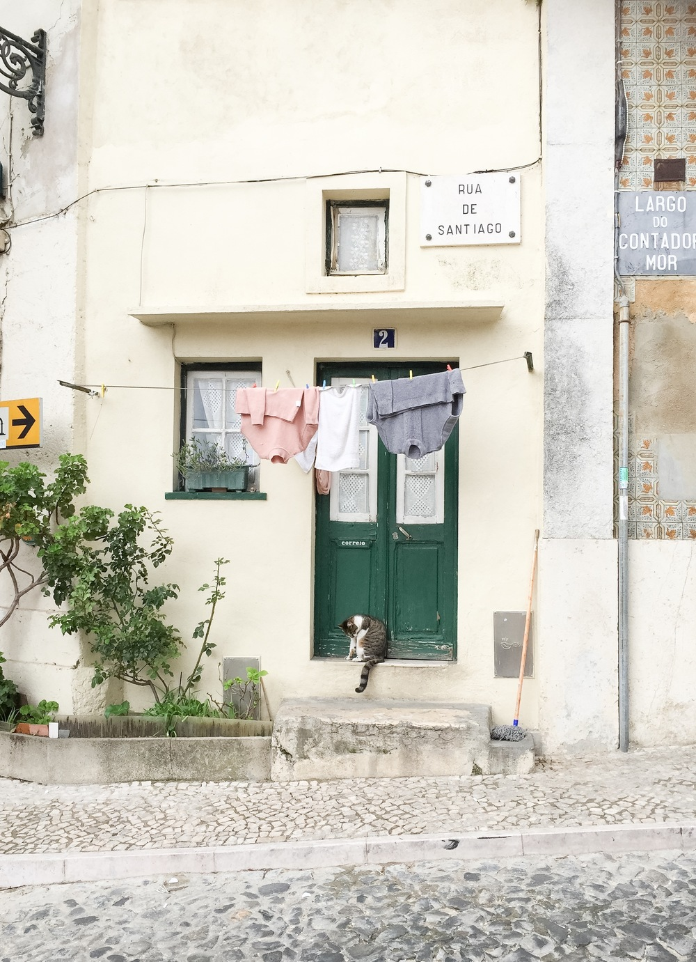 A cat is seen in the streets of Lisbon, Portugal. Photo: Larisa Graham