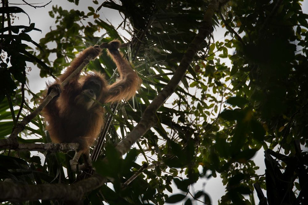 """""""Mekar"""" had been trapped in this tiny patch of forest for over seven days."""