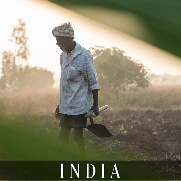 CO_india2.jpg