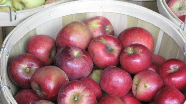 Basket of fresh apples.