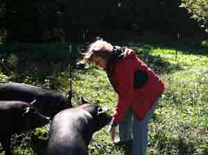cathy-mulefoot-hogs.jpg