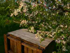 crate-apple-blossom.jpg
