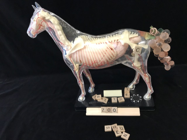 Horse's Ass