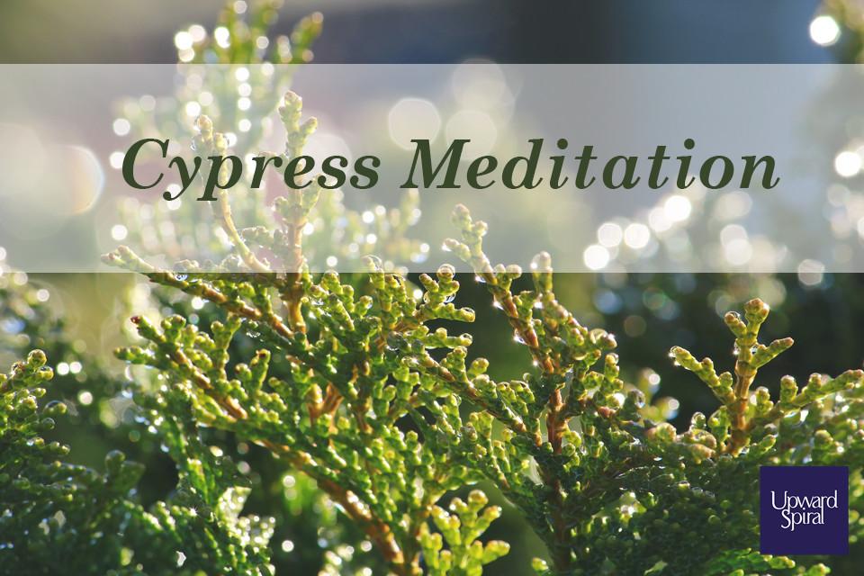 cypress-meditation.jpg