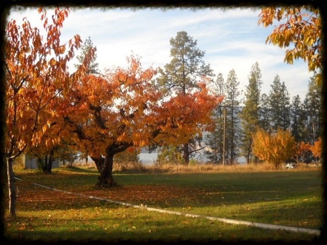 riverview orchard fall.jpg