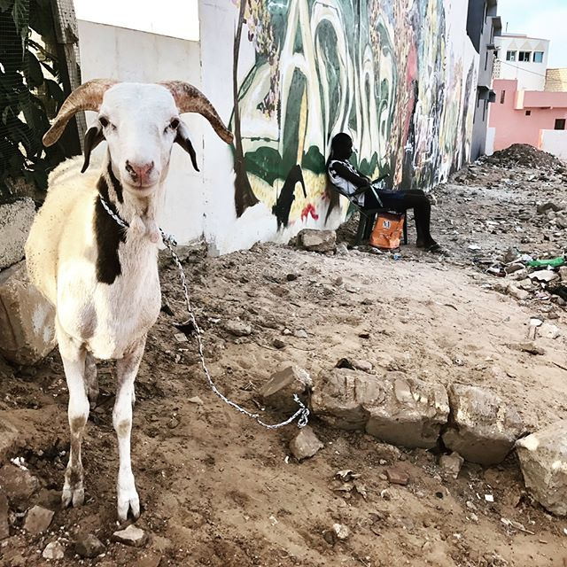 Senegalese vibes. Street art, sport, and sheep.