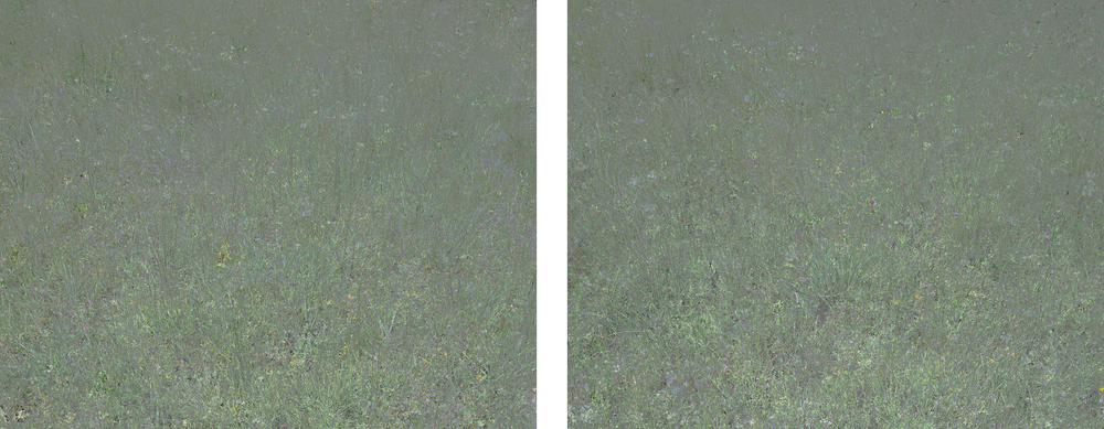 Untitled (Meadow 1) & Untitled (Meadow 2)