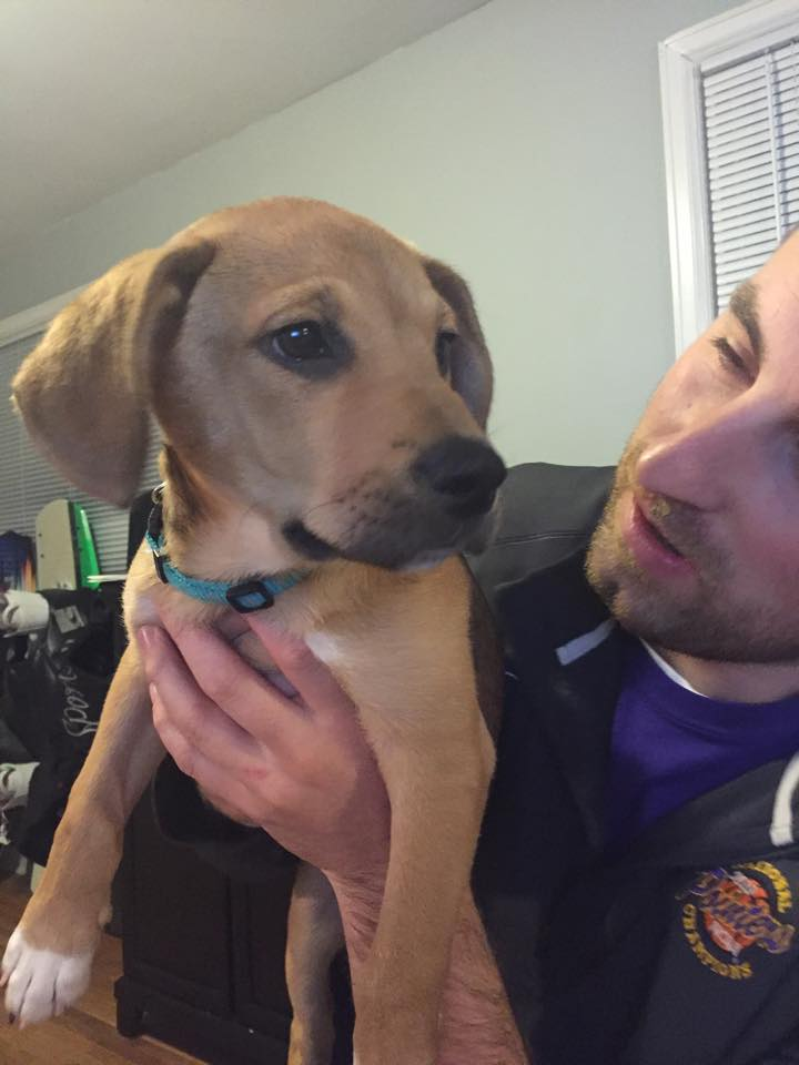 Madison   Lab Mix   12 w.o. female New to Foster Care