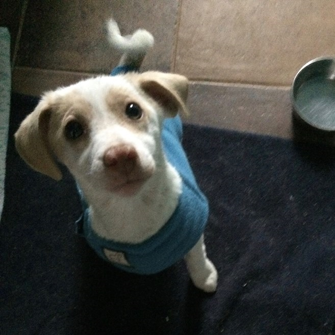 John  Hound Mix   10 w.o. male New to Foster Care