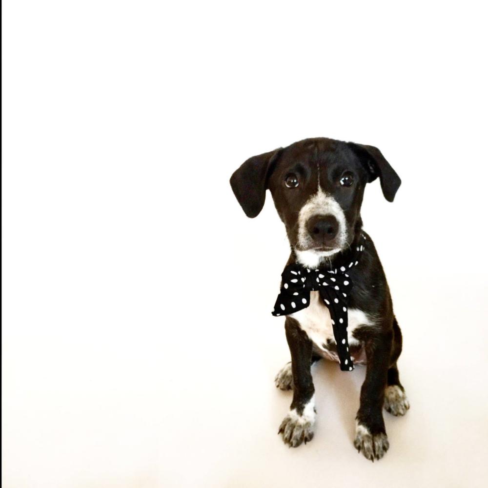 First foster pup, Arti!