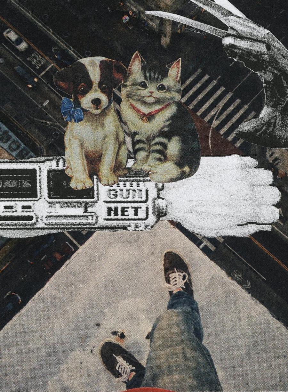 Kitten_Cam.jpg