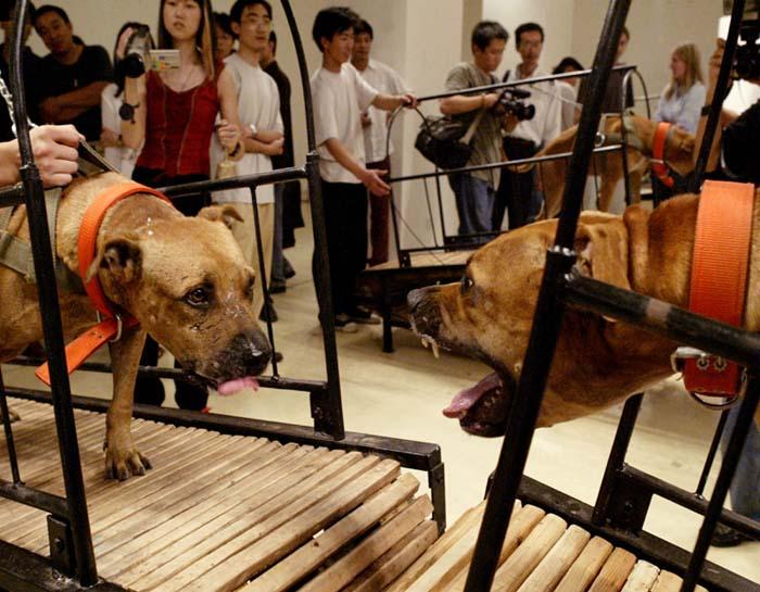 Os cachorros que não podem se tocar,  de Sun Yuan e Peng Yu, é uma das obras questionadas da exposição  Art and China after 1989: Theater of the World , no Museu Guggenhein de Nova York