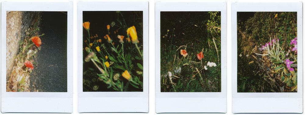 emma day roadside flowers