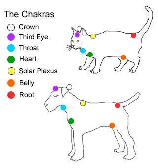 ChakPet.jpg