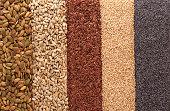 183952420 seeds in rows.jpg