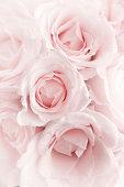 182688237 pink 3 headon.jpg