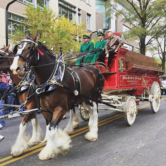 Turkeys out, #Clydesdales in......#christmas #design