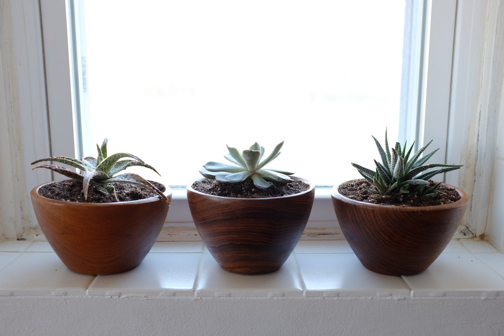 Succulents replanted into teak bowls