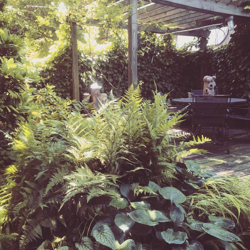 Tori Sparks_Heatherton_urban garden3.JPG