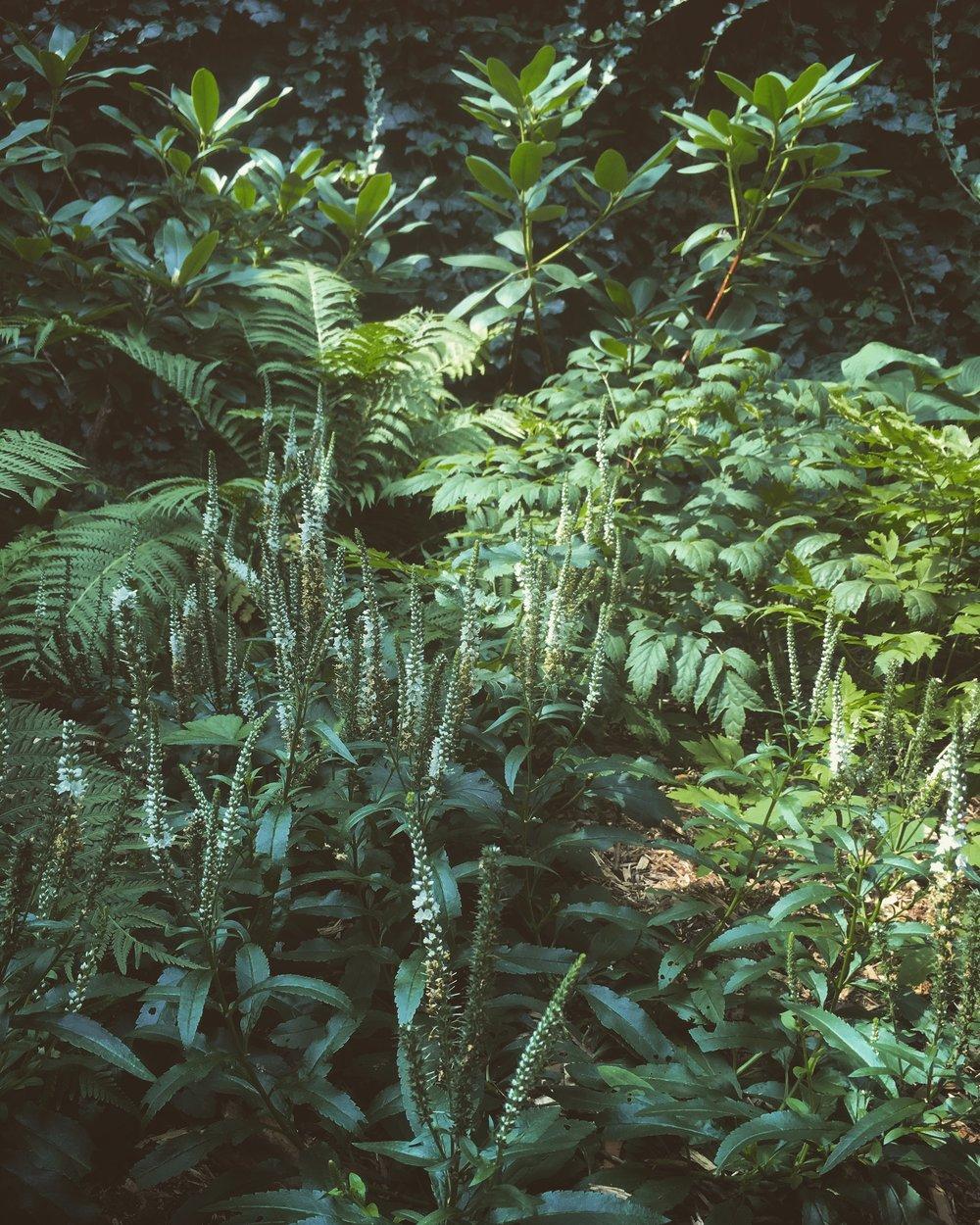 Tori Sparks_Heatherton_urban garden6.JPG