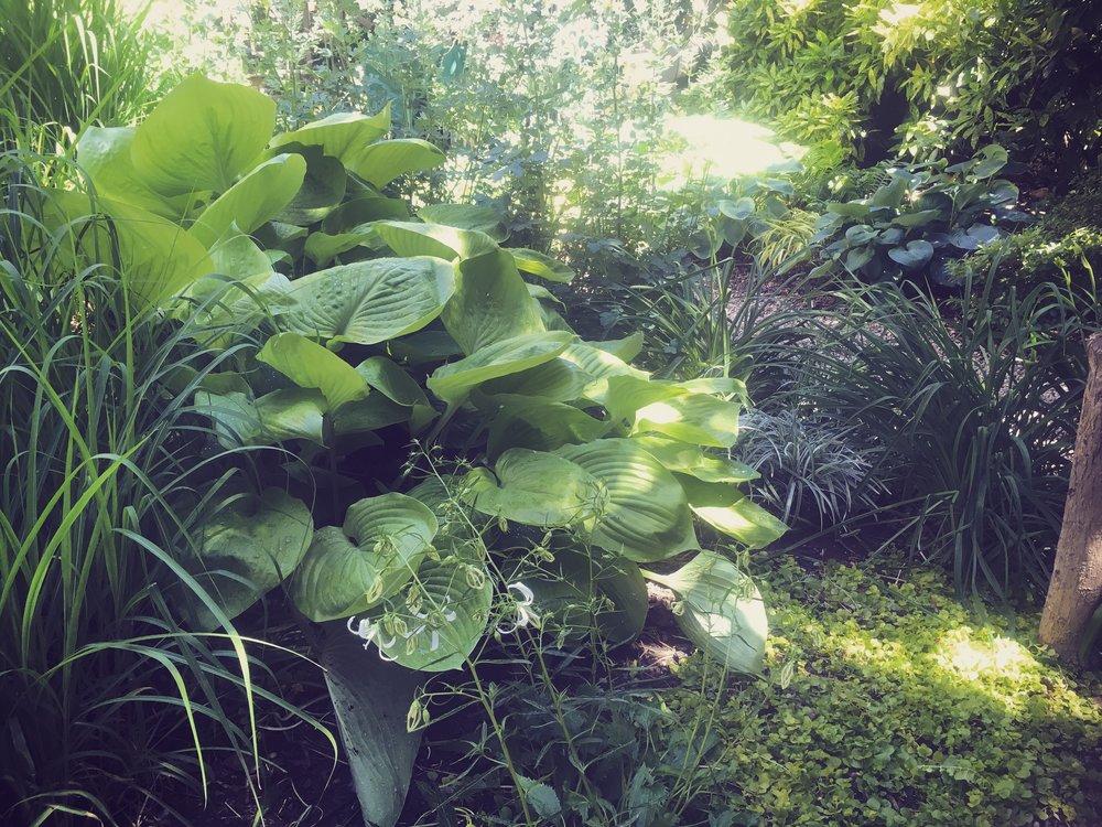 Tori Sparks_Heatherton_urban garden7.JPG