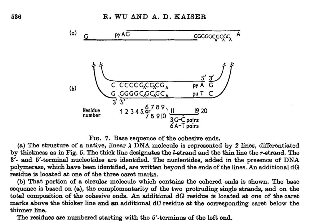 From Wu & Kaiser, Journal of Molecular Biology, 1968.