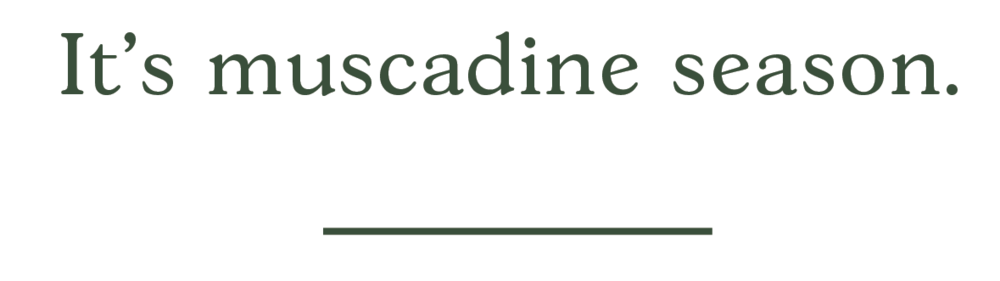 Muscadine-04.png