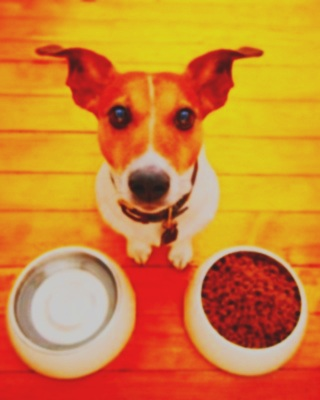 A-hungry-dog-looking-up-near-his-food-and-water-bowl.jpg