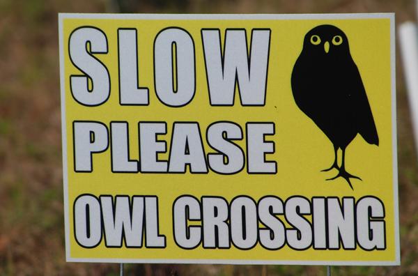 owlCrossWeb_edited-1.jpg