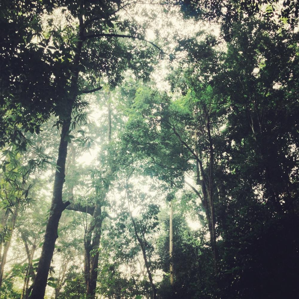Northern Thailand Jungles