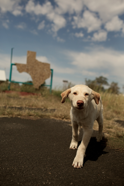 Puppy in Texas
