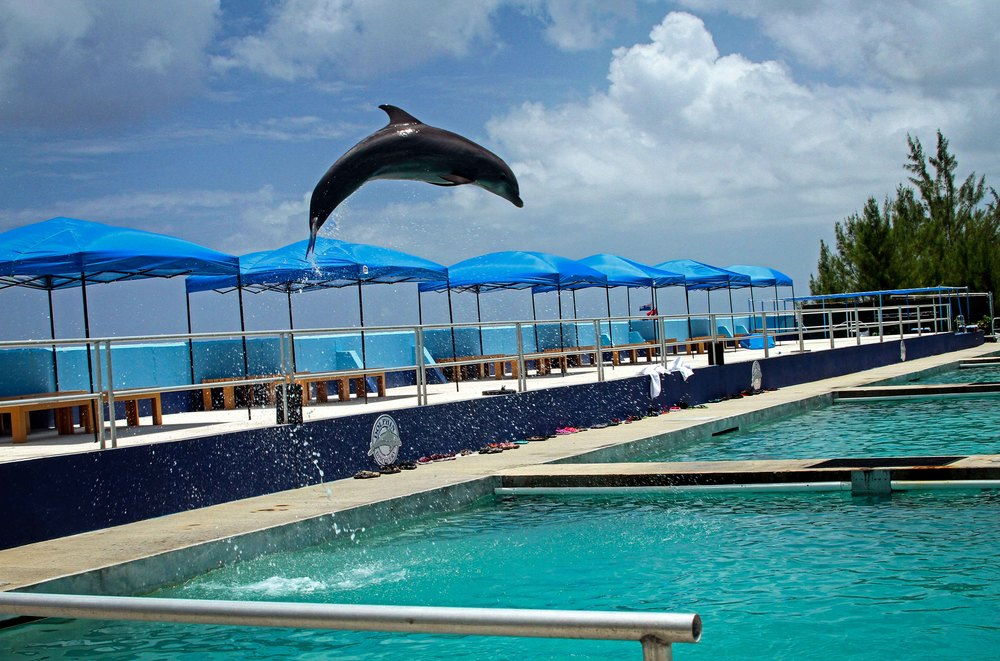 Flying dolphin Grand Cayman Islands