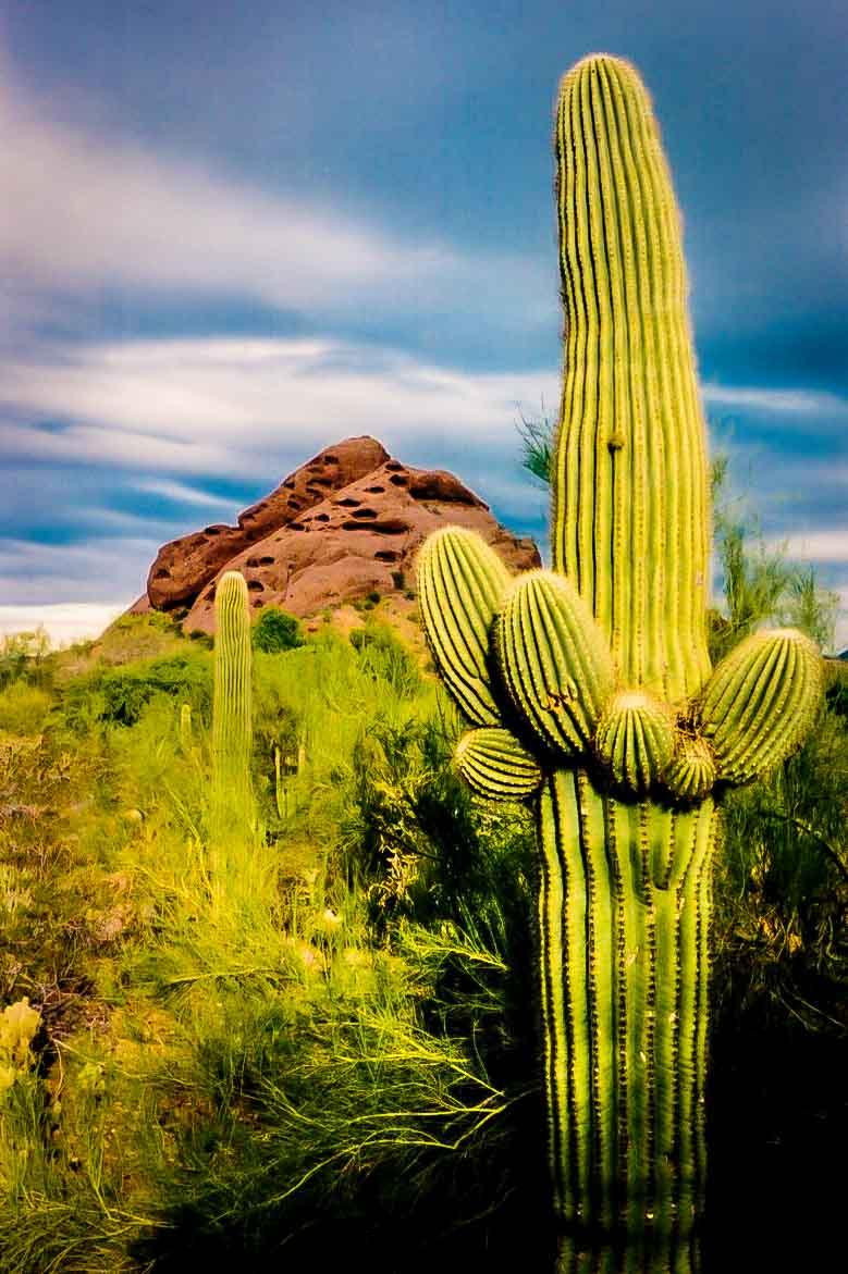 Desert Botanical Gardens   Phoenix, AZ