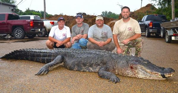 A group of Mississippi hunters pose with the alligator they caught to break the state record. Photo courtesy of the Mississippi Department of Wildlife, Fisheries and Parks
