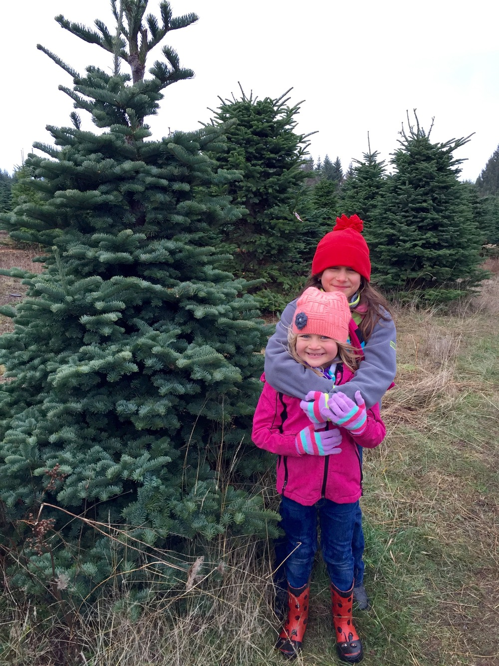 Happy (Christmas Tree) Hunting!