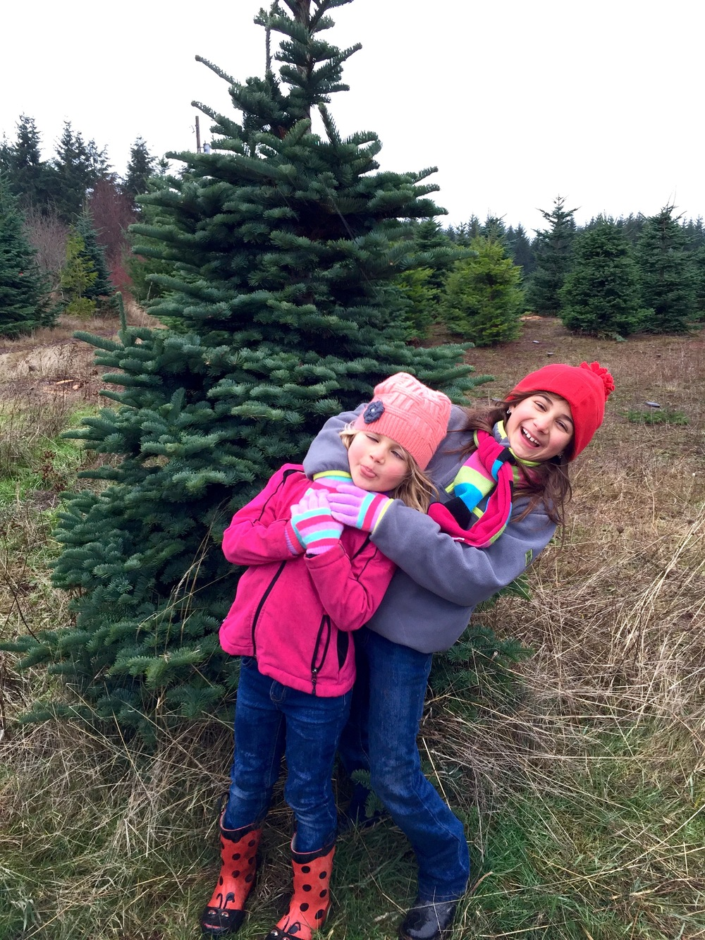 Happy (Christmas Tree) Hunting