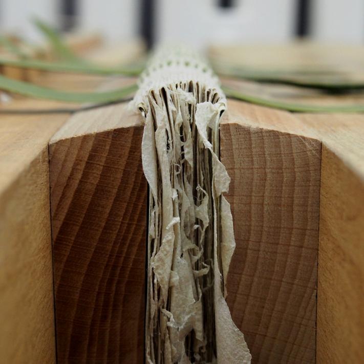 Herbarium 3.jpg
