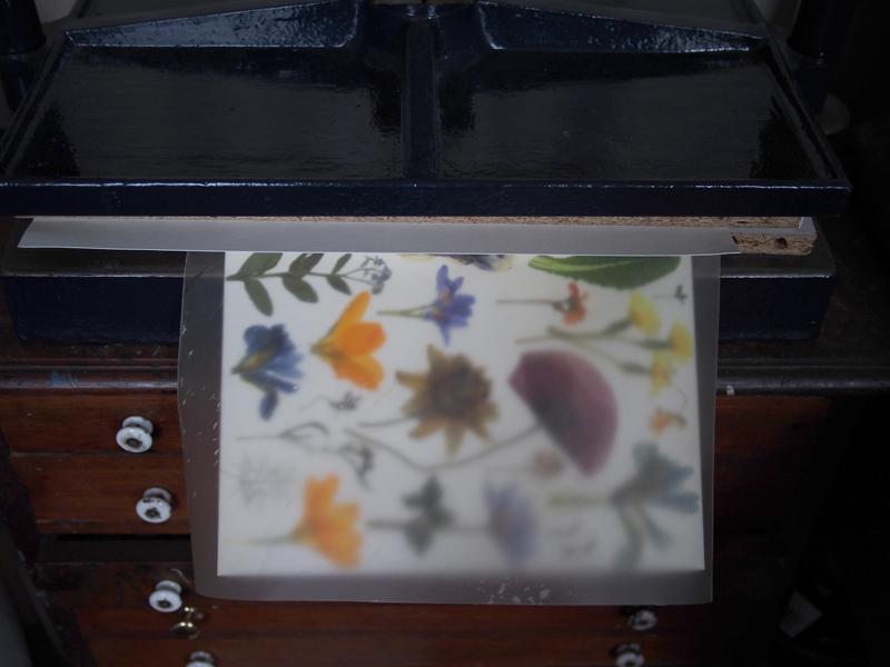 Herbarium DT 4.jpg