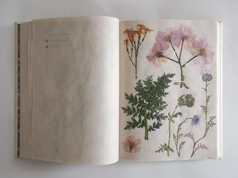 Herbarium 26.jpg